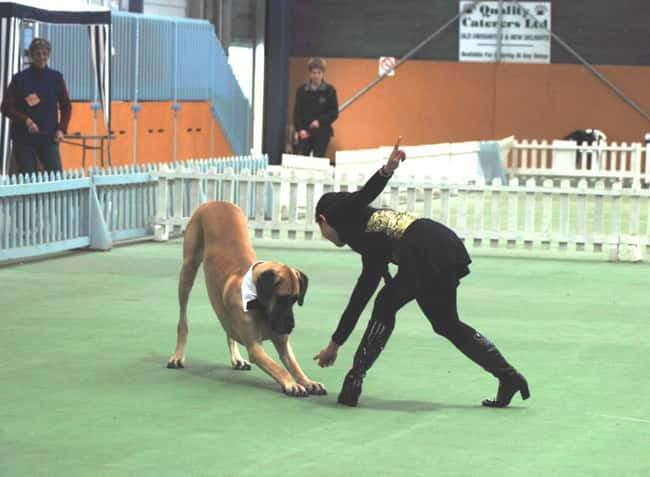 Musical Canine Freestyle is listed (or ranked) 9 on the list The Weirdest Sports from Around the World