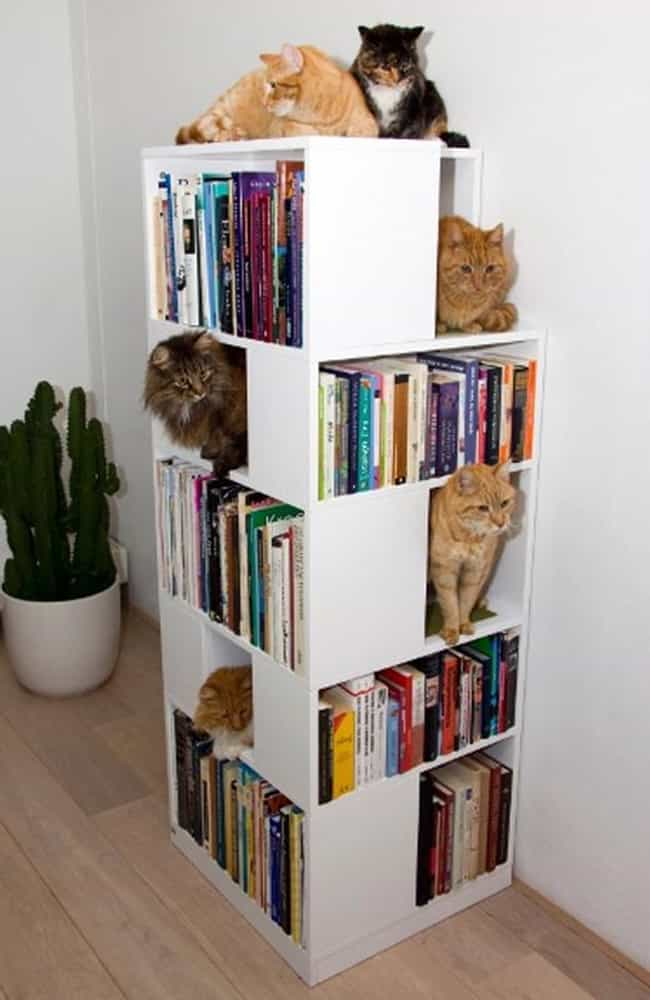 This Bookshelf That Is Also a ... is listed (or ranked) 2 on the list 18 Cats Who Find Your Bookshelf More Comfy Than a Cat Bed