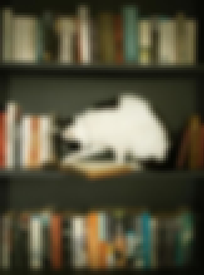 This Cat Who Is Busy, Okay? is listed (or ranked) 3 on the list 18 Cats Who Find Your Bookshelf More Comfy Than a Cat Bed