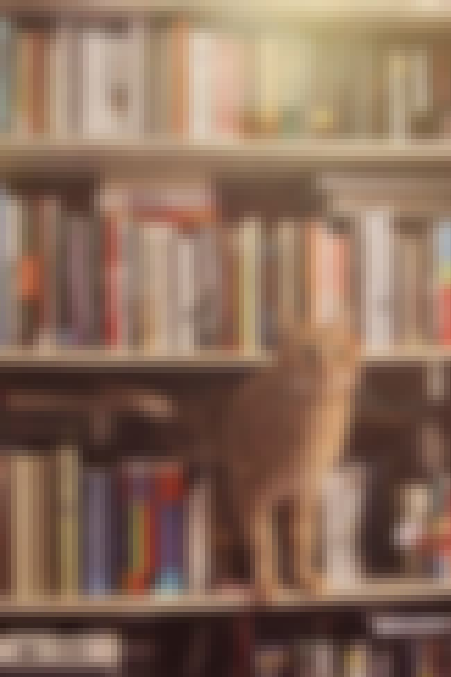 This Cat Who Will Find Some Ro... is listed (or ranked) 5 on the list 18 Cats Who Find Your Bookshelf More Comfy Than a Cat Bed