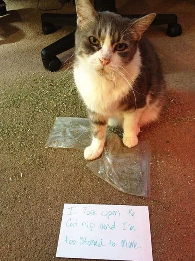 """Success Is Merely Excess ... is listed (or ranked) 2 on the list The Best Cat Shaming Pictures on the Internet"