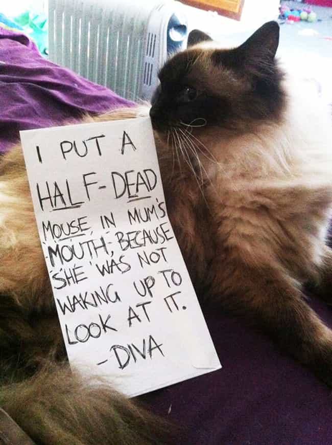 """Wasn't It Kind of Me ... is listed (or ranked) 4 on the list The Best Cat Shaming Pictures on the Internet"
