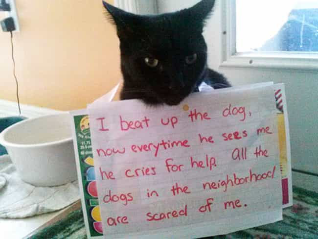 'I Beat Up The Dog' is listed (or ranked) 1 on the list The Best Cat Shaming Pictures on the Internet