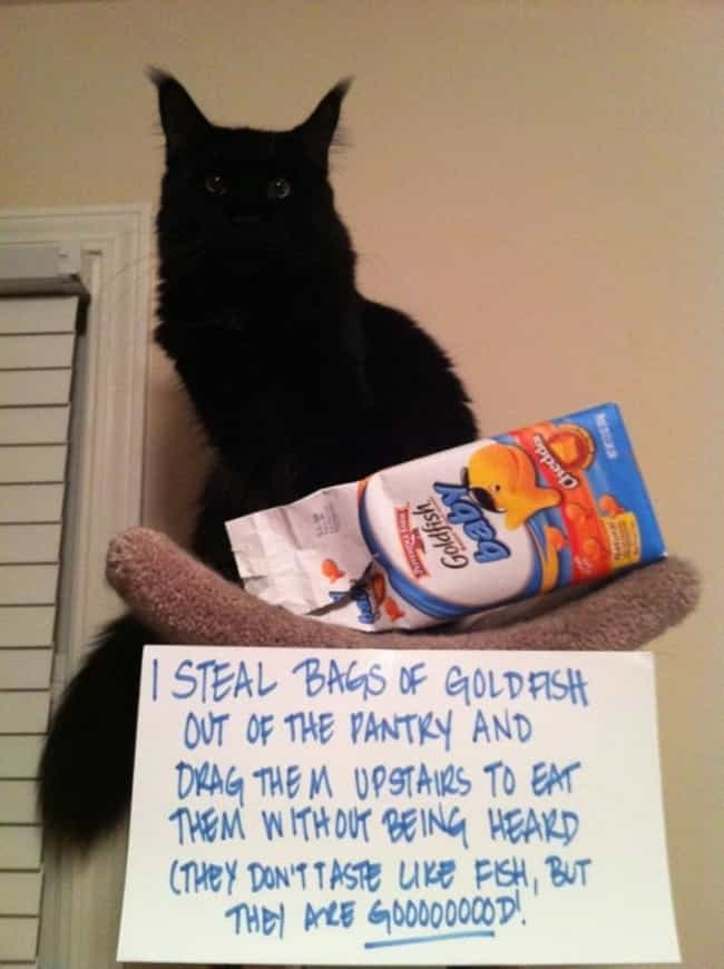 """Stealth. I Will Teach You... is listed (or ranked) 3 on the list The Best Cat Shaming Pictures on the Internet"