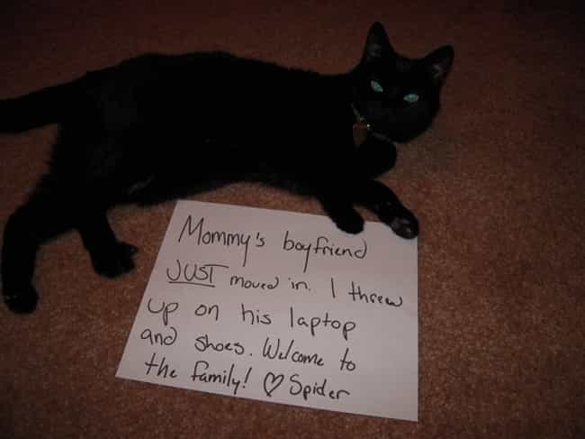"""The Extra Mile: I Goes It... is listed (or ranked) 1 on the list The Best Cat Shaming Pictures on the Internet"