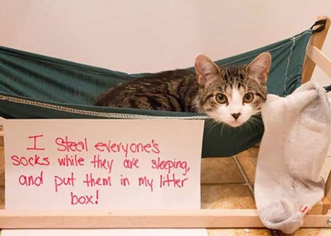 """""""It's a Great Place fo... is listed (or ranked) 1 on the list The Best Cat Shaming Pictures on the Internet"""
