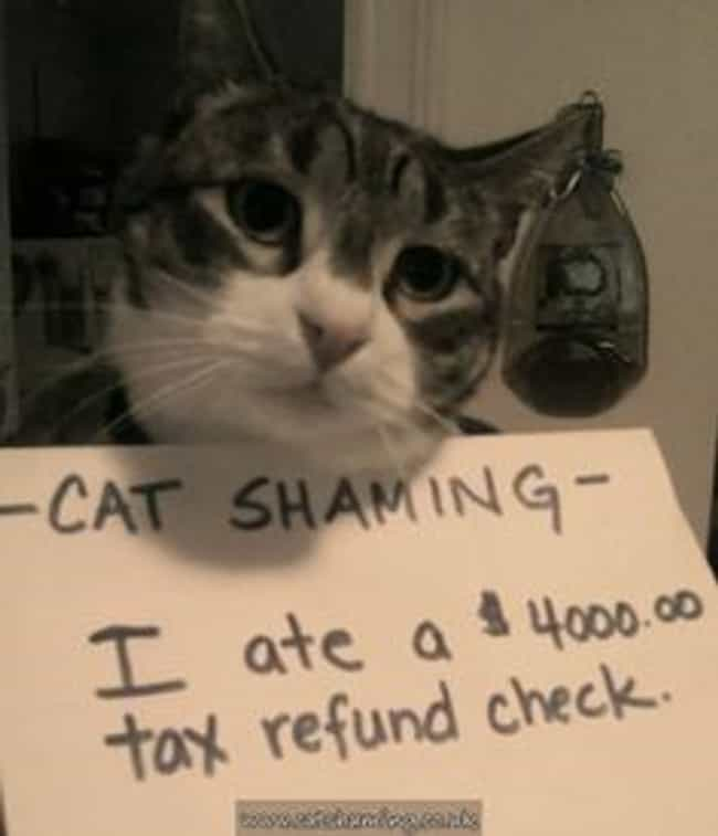 """""""Don't Worry Dad, I... is listed (or ranked) 4 on the list The Best Cat Shaming Pictures on the Internet"""