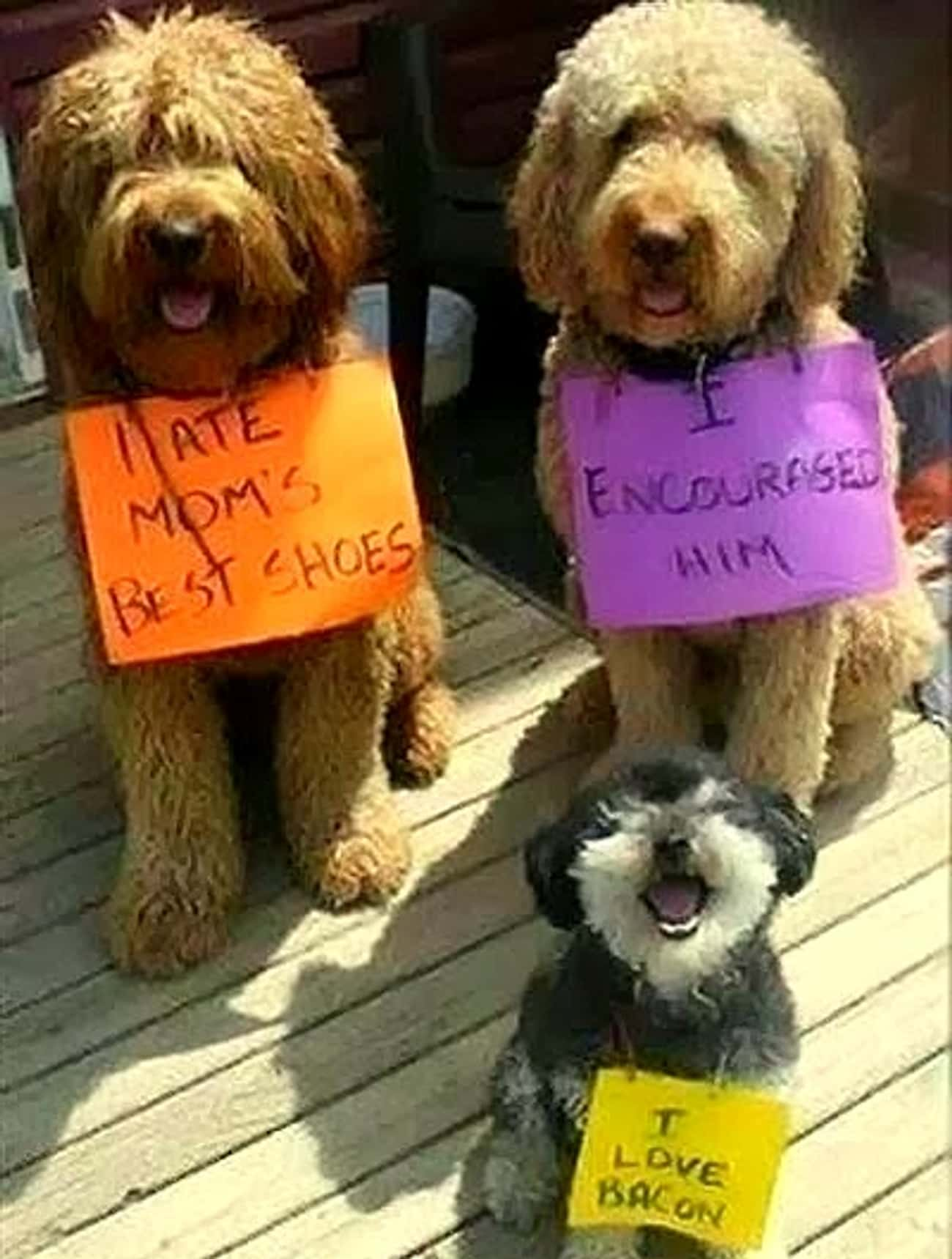 'I Ate Mom's Best Shoes' is listed (or ranked) 4 on the list 31 of the Most Hilarious Dog Shaming Photos Ever