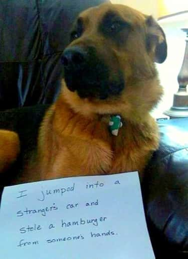 'I Took A Hamburger From Someo is listed (or ranked) 2 on the list 31 of the Most Hilarious Dog Shaming Photos Ever