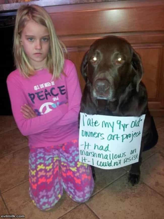 This Early Childhood Edu... is listed (or ranked) 4 on the list 40 of the Most Hilarious Dog Shaming Photos Ever