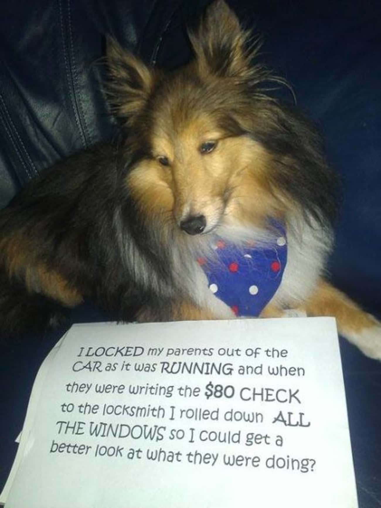 'I Locked My Parents Out Of Th is listed (or ranked) 1 on the list 31 of the Most Hilarious Dog Shaming Photos Ever