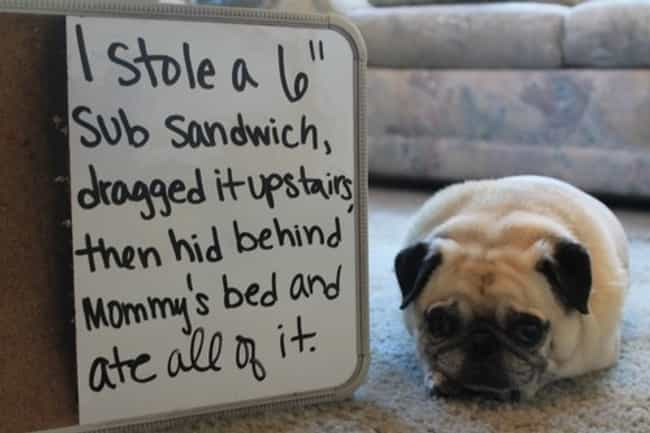 This Little Guy Regrets Nothin... is listed (or ranked) 3 on the list 40 of the Most Hilarious Dog Shaming Photos Ever