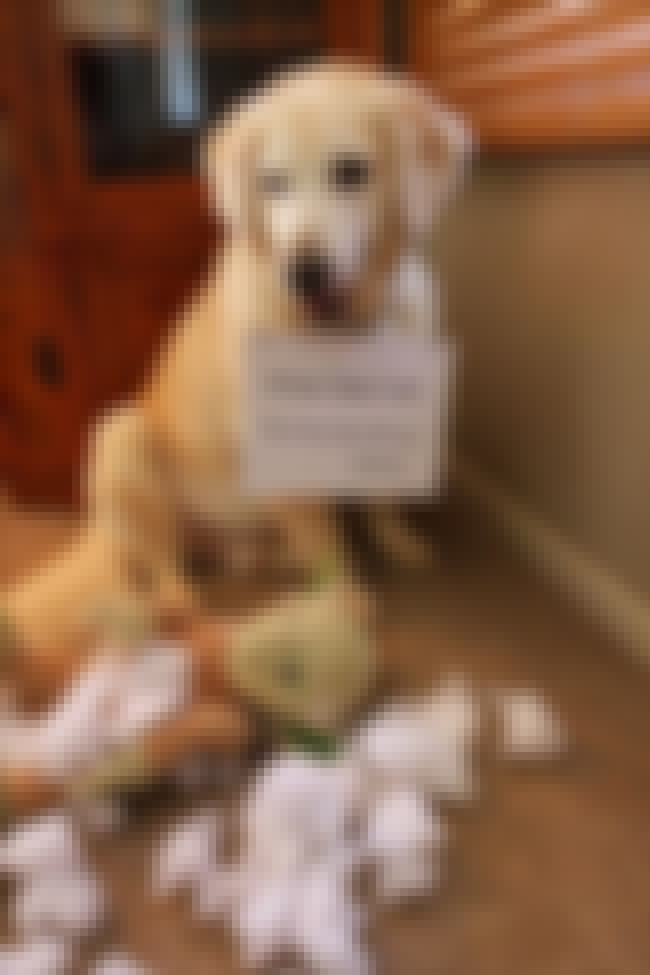 This Young Jedi is listed (or ranked) 4 on the list 40 of the Most Hilarious Dog Shaming Photos Ever