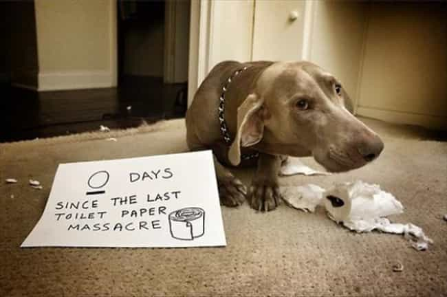 It's Not Like Humans Need ... is listed (or ranked) 4 on the list 40 of the Most Hilarious Dog Shaming Photos Ever