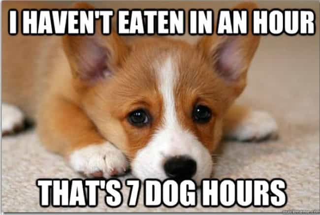 You Were Too Needy is listed (or ranked) 2 on the list 30 Ways You Screwed Up Your Relationship, as Told by Corgis