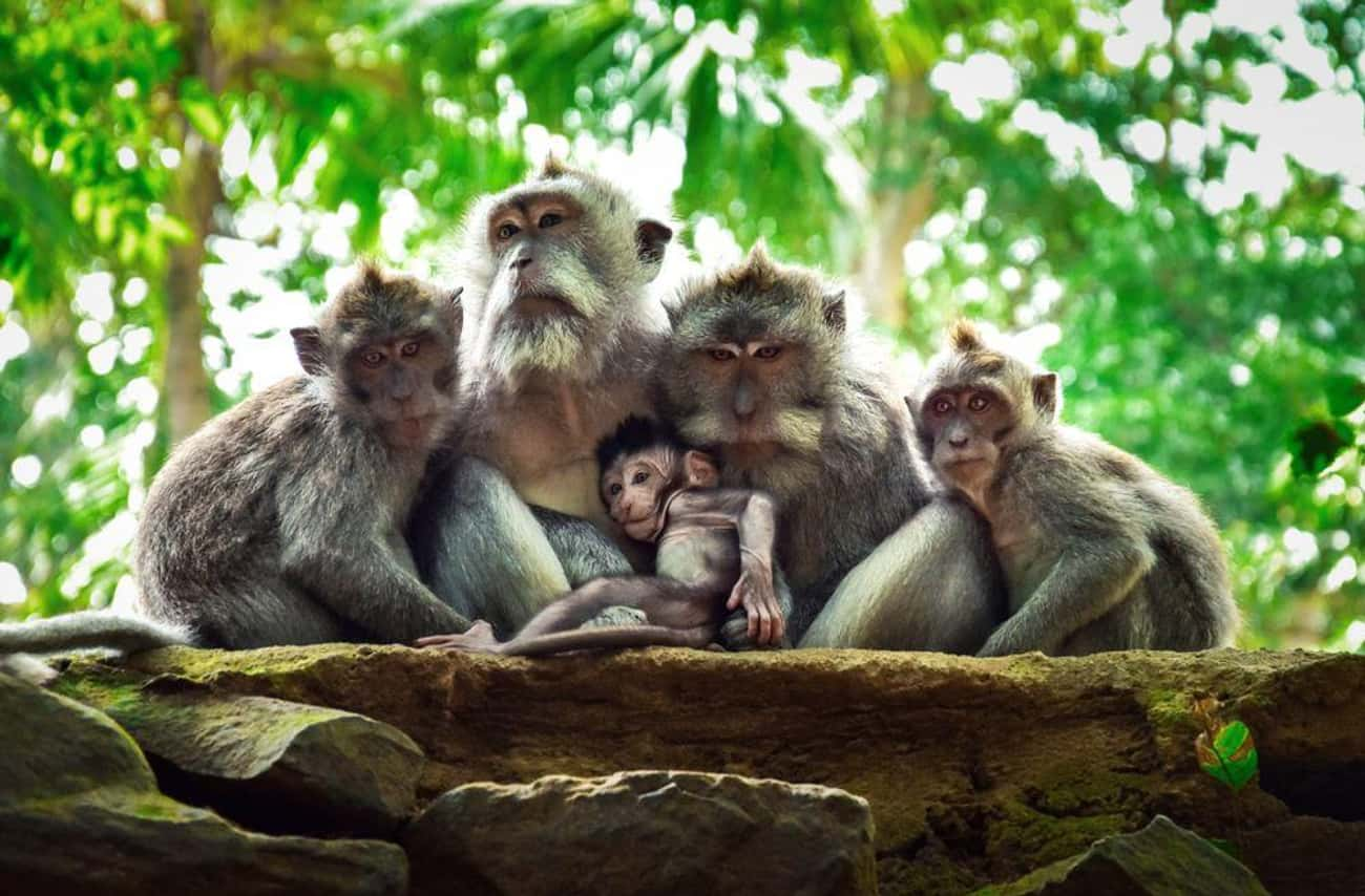 Such Good Posing! is listed (or ranked) 4 on the list 20 Animal Family Photos That Are Way Cuter Than Yours