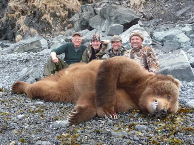 The Kodiak Bear Is Genetically... is listed (or ranked) 4 on the list 18 Disgusting Pics of Trophy Hunters Who Killed Wild Animals