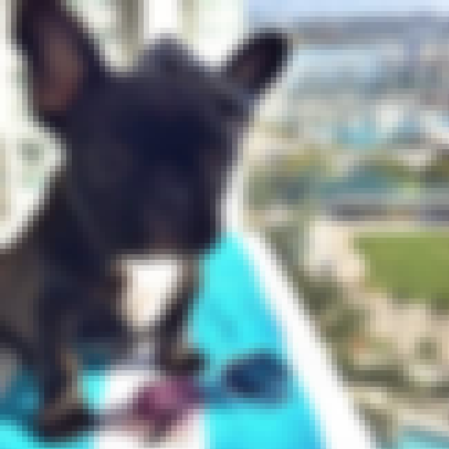 This Puppy That Is Scared of H... is listed (or ranked) 2 on the list The Best of the Rich Dogs of Instagram