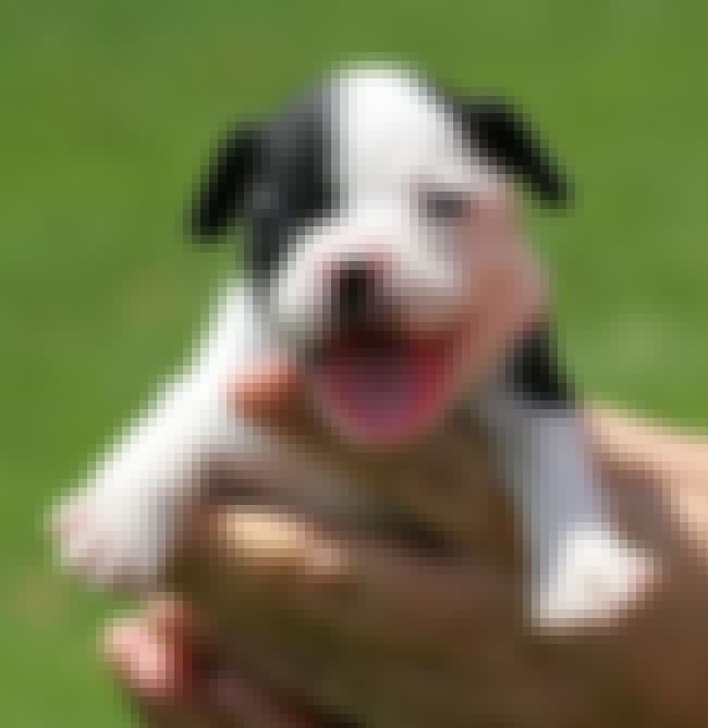 Being Held Really Makes Life W... is listed (or ranked) 3 on the list The 34 Happiest Puppies on Earth
