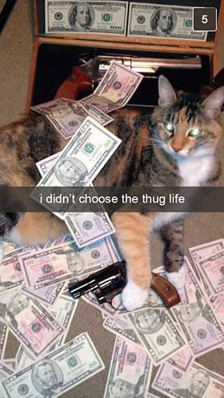 The Thug Life Chose Him on Random Snapchats from Your Cat