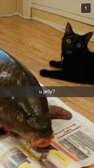 Cat Can't Handle This Food Porn on Random Snapchats from Your Cat