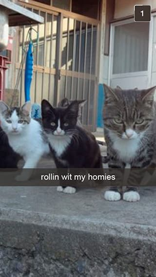 Hood Cat Puts Bros Before Hoes on Random Snapchats from Your Cat