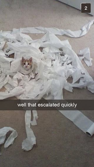 The TP Roll Had It Coming on Random Snapchats from Your Cat