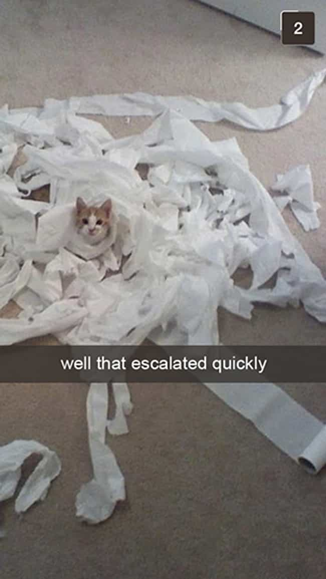 The TP Roll Had It Comin... is listed (or ranked) 2 on the list Snapchats from Your Cat