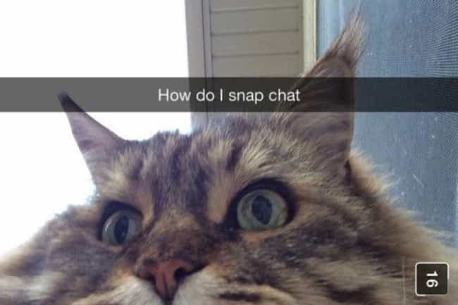 Grandpa Cat Can't Even wit... is listed (or ranked) 3 on the list Snapchats from Your Cat