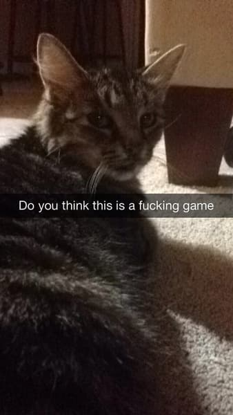 Serious Cat Does Not Play on Random Snapchats from Your Cat