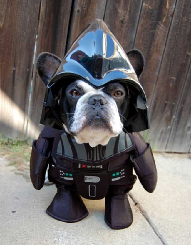 Arf Vader is listed (or ranked) 5 on the list The Punniest Dog Names for Your Puppy Pals