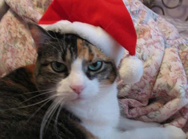 Santa Claws is listed (or ranked) 4 on the list Purr-Fect Cat Name Puns For Your Favorite Furry Friend