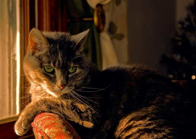 Charles Lickens is listed (or ranked) 5 on the list Purr-Fect Cat Name Puns For Your Favorite Furry Friend