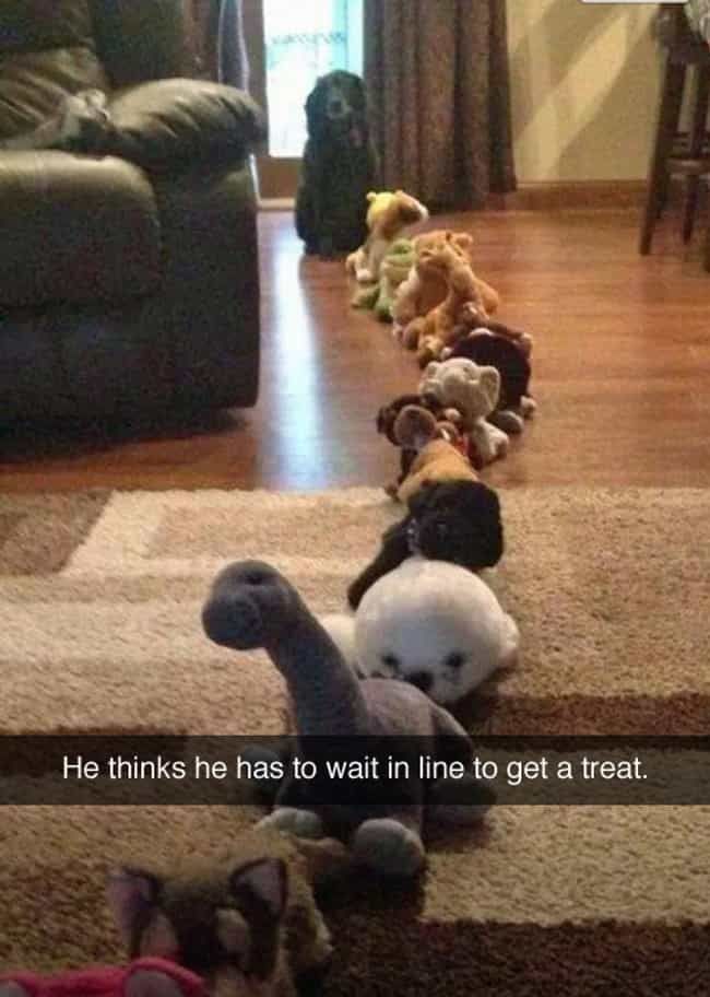 The Prankster Cat Has Struck A... is listed (or ranked) 3 on the list Snapchats from Your Dog
