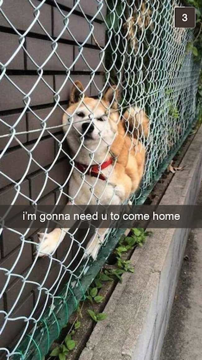 This Cry for Help is listed (or ranked) 4 on the list Snapchats from Your Dog