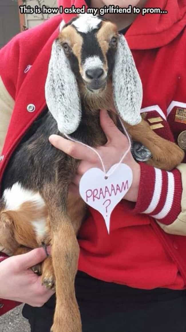 Not to Get Your Goat, Bu... is listed (or ranked) 1 on the list The Most Ridiculous, Over-the-Top Promposals