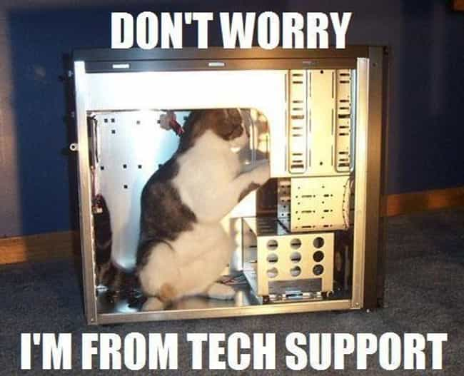 Tech Support Cat Digs Deep Int... is listed (or ranked) 1 on the list Cats in Over Their Heads Making Big Decisions