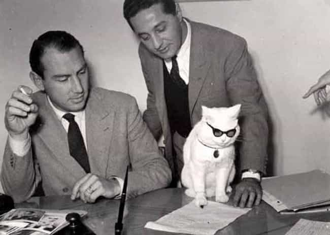 Lawyer Cat Spots Issues with T... is listed (or ranked) 3 on the list Cats in Over Their Heads Making Big Decisions