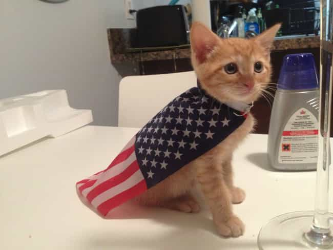 The-Odor Roosevelt is listed (or ranked) 2 on the list Cats That Should Run for President