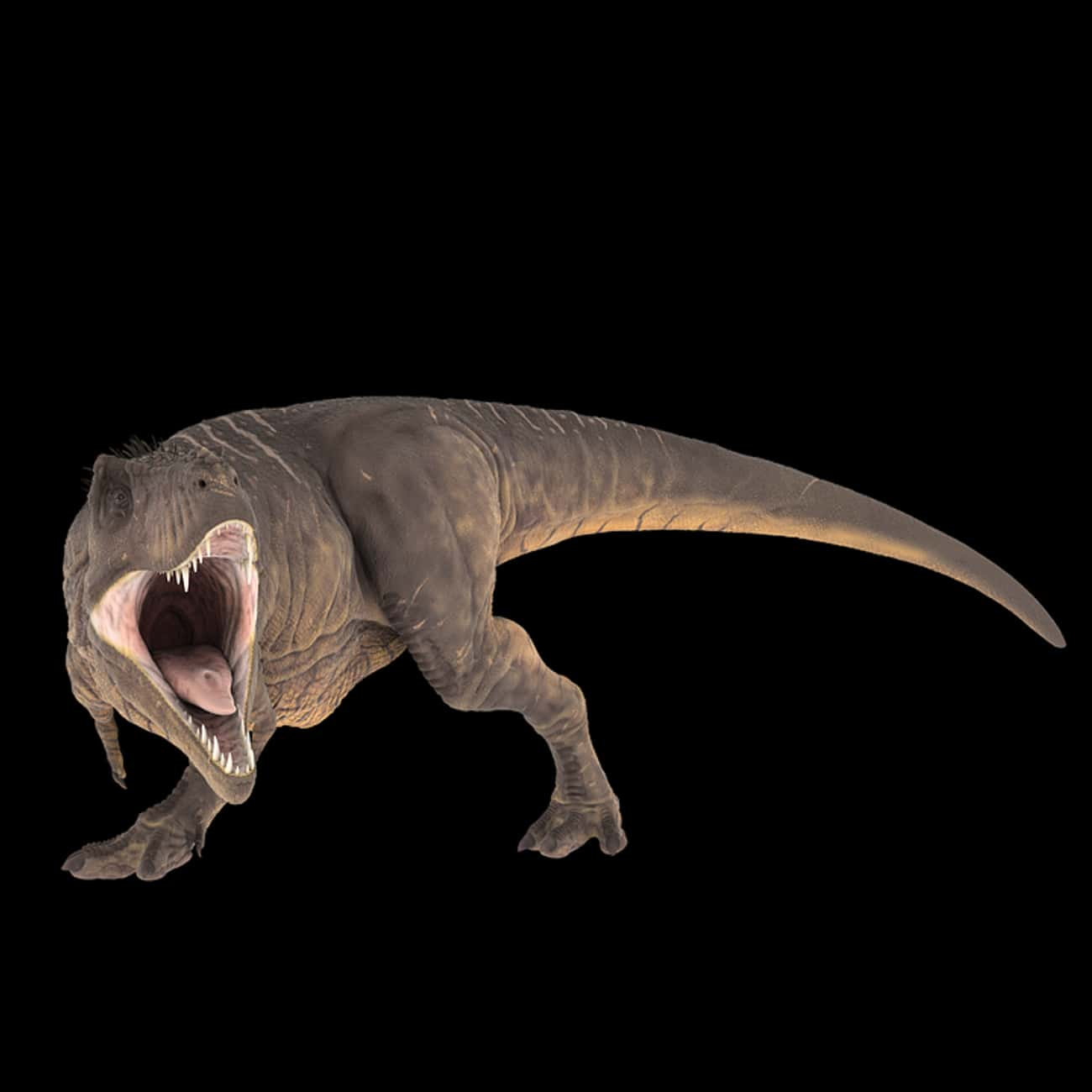Tyrannosaurus Rex's Small Forearms Were Weak And Useless