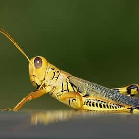 Why Do Grasshoppers Not Go To  is listed (or ranked) 8 on the list The Best Sports Jokes