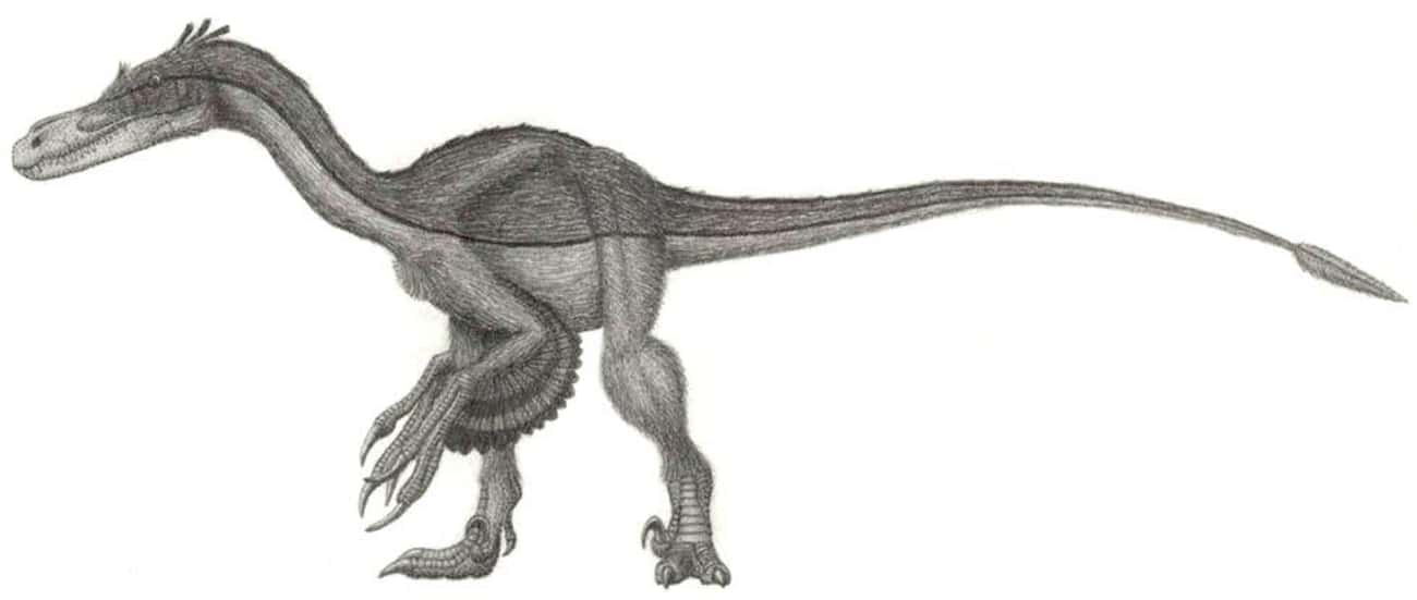 Velociraptors Were Terrifying And Larger Than Humans