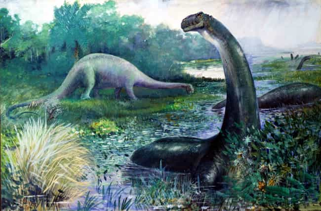 The Brontosaurus Is A Real Din... is listed (or ranked) 3 on the list 21 Myths You Were Taught About Dinosaurs