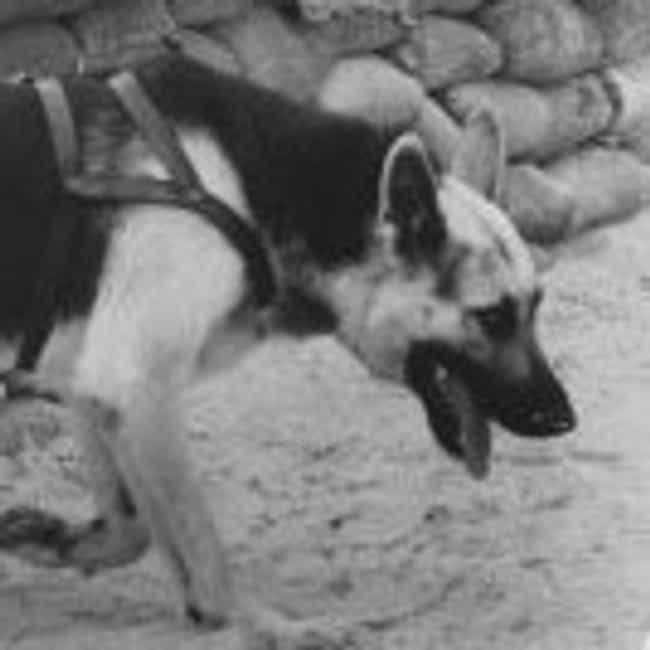 Kaiser is listed (or ranked) 4 on the list The Most Decorated Animals in the Military