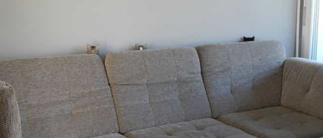Couch Cat Shares His Technique... is listed (or ranked) 2 on the list The World's Stealthiest Cats Caught Peeking