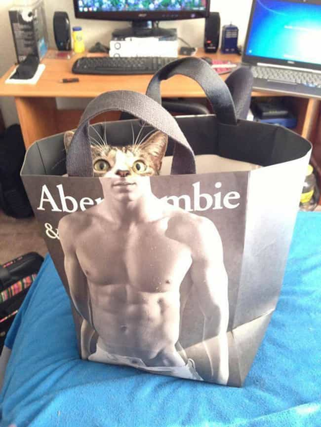Abercrombie Cat Doesn't Mi... is listed (or ranked) 3 on the list The World's Stealthiest Cats Caught Peeking