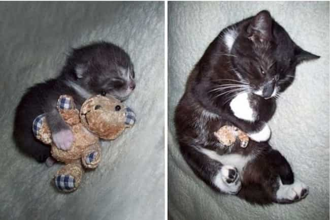 This Adorable Boy and His Bear is listed (or ranked) 2 on the list Adorable Pets Cuddling Their Favorite Toys