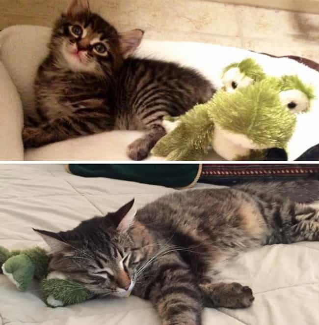 This Furry One Loves Chillin&#... is listed (or ranked) 3 on the list Adorable Pets Cuddling Their Favorite Toys