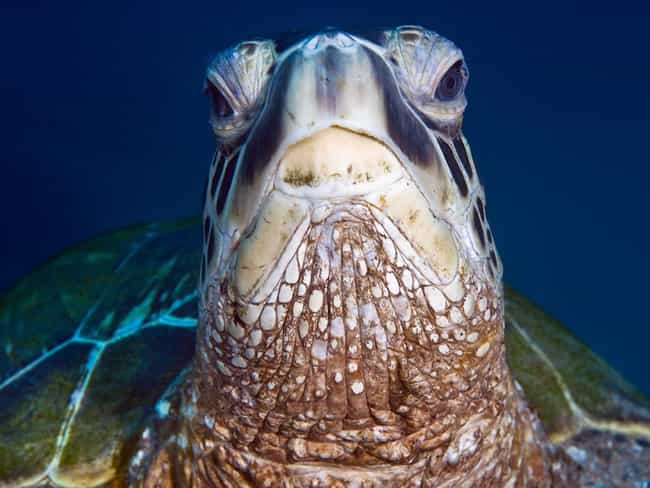 This Turtle, Who Has Heard Tha... is listed (or ranked) 1 on the list 12 Turtles Who Are Just Sick of It