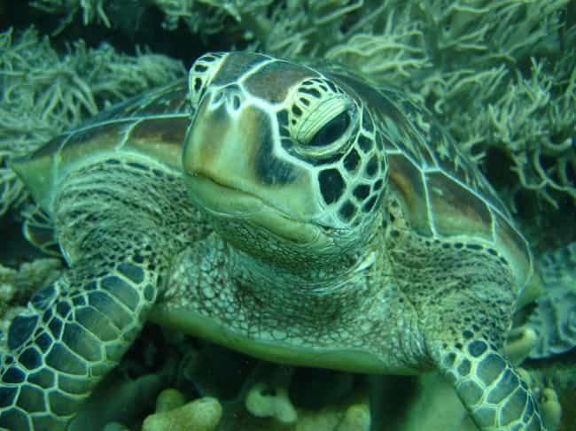 This Turtle, Who Wasn't Born Y... is listed (or ranked) 2 on the list 12 Turtles Who Are Just Sick of It